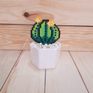 Декоративен кактус в саксия